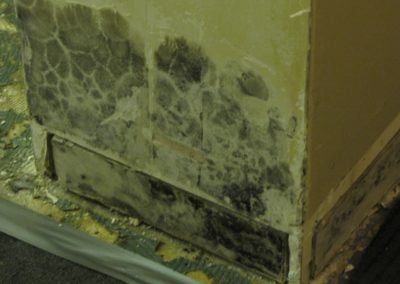 interior mold damage expose walls