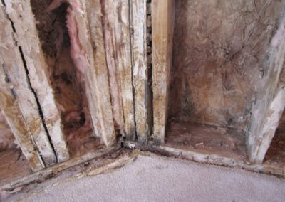 exposed mold damage drywall insulation