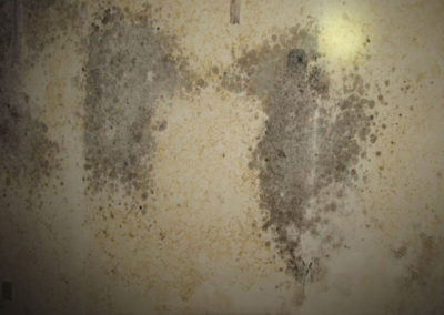 mold and asbestos damage to property
