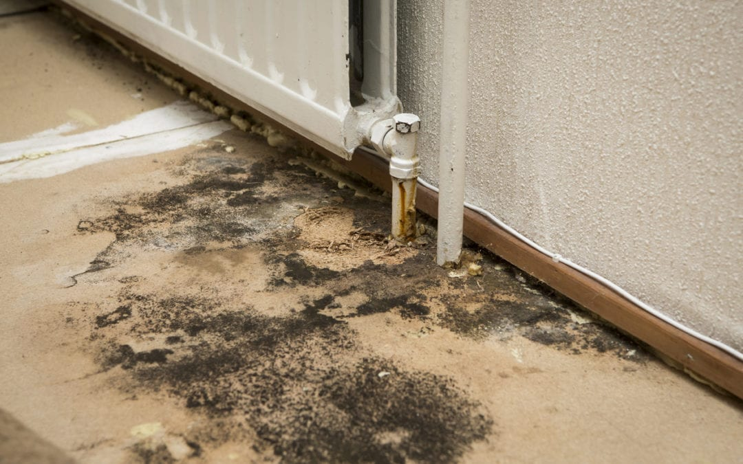 mold growth on floor of building